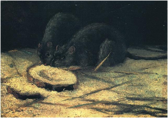 Wallpapers With Work Quotes Two Rats By Vincent Van Gogh 647 Painting Oil On Panel
