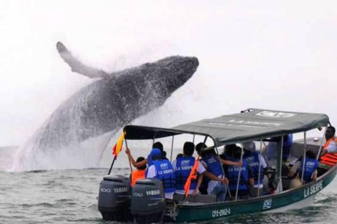 Comenzó la temporada de avistamiento de ballenas | Vanguardia.com