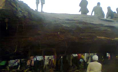 Ancient tree tragedy: Tears, condemnations trail multiple