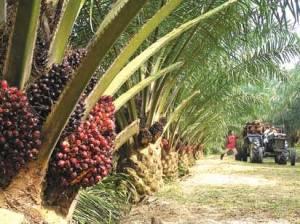 palm-oil-Boycotting