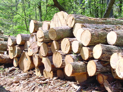 •Logs of wood …aftermath of logging