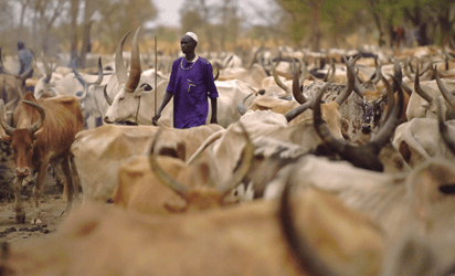Four corpses recovered in suspected herdsmen attack in Delta - Vanguard News