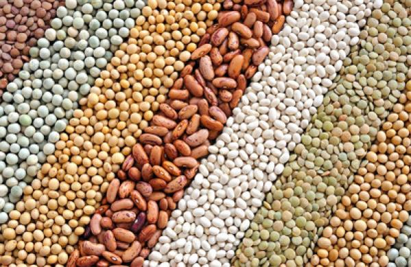 EU Ban: NAQS discloses effort to make Nigerian beans acceptable internationally