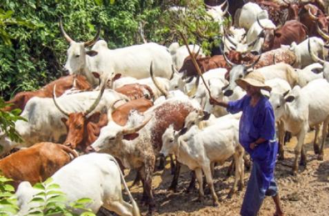 Civil defence arrests Fulani herdsman for allegedly destroying 5-acre farm in Oyo