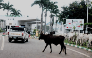 One dies, 21 injured as cows caused auto crash in Osun