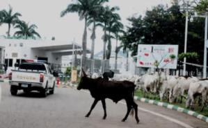 Herder, Nomads, Fulani