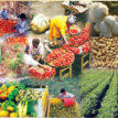 FG set to galvanize food production with 60, 000 tractors