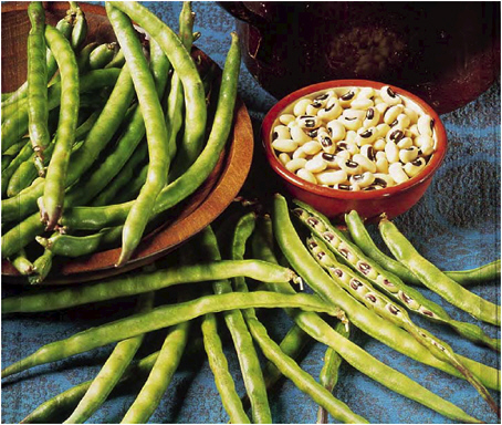 PBR Cowpea 'll bridge demand deficit of 500, 000 tonnes — NBDA