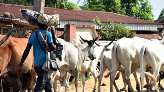 Herdsmen Attack: Youths chase herdsmen, cows from community