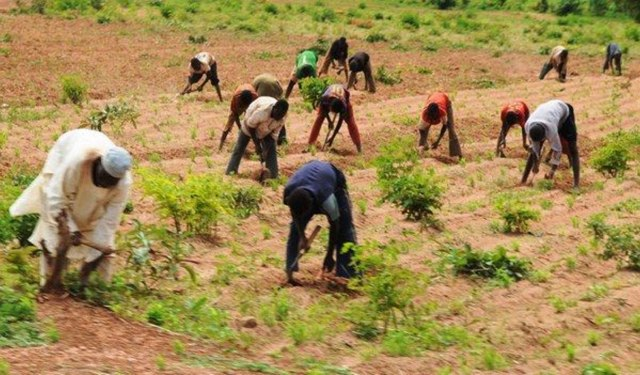 farmers, Yobe irrigation farmers seek government's support