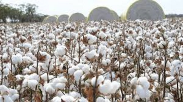 CBN, state govt. pledge support for cotton farmers in Ekiti