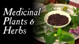 HEALTH 101: Plants,Ethnomedicine and Drug Discovery