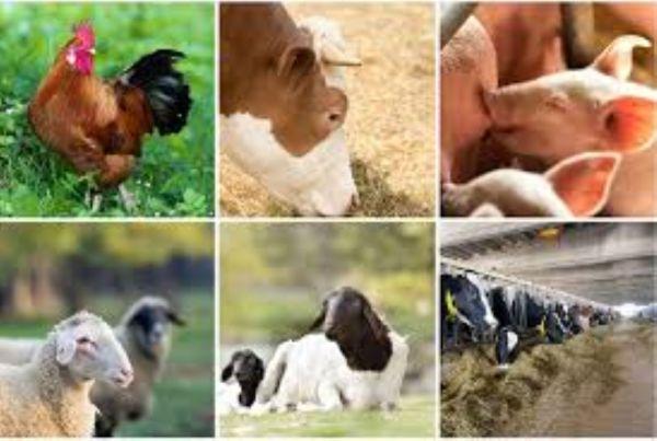 National Livestock Transformation Plan on course — Kabir
