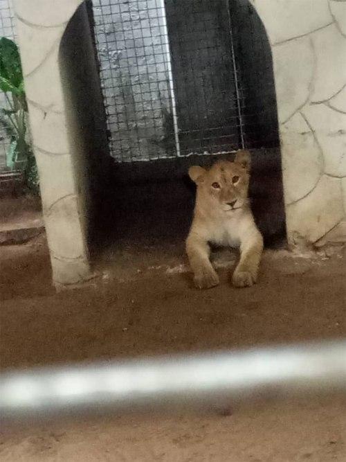 Lagos to enact law criminalising keeping dangerous animals as pets