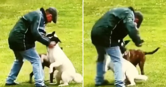 Man jailed for punching his dog while walking in park