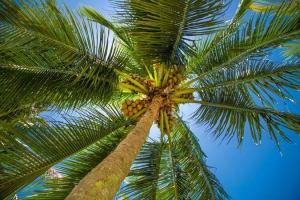Falling palm tree hits owner to death in Enugu community