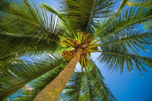 Falling palm tree hits owner to death in Enugu community