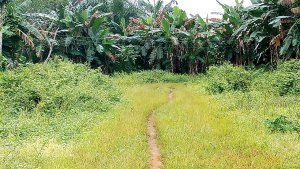 Enugu Communities enraged over acquisition of Ancestral Lands for Varsity