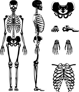 Forensic Anthropology: The Identification of human remains to solve a crime