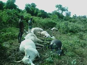 Lightning strikes seven cows to death in Osun