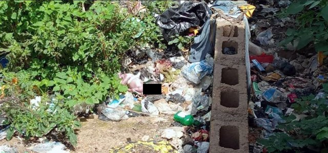 Decaying baby found in refuse dump in Bauchi community