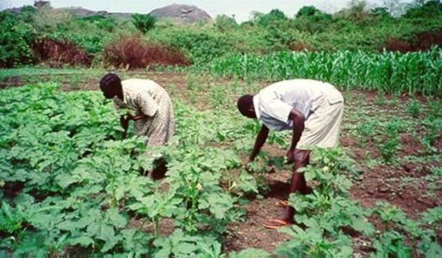 RBDAs have boost food security, create massive employment in 5 years — Engr Adamu