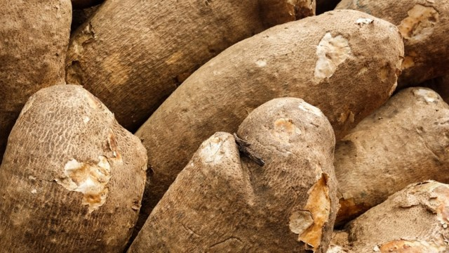 Agribusiness: FG builds capacity of extension workers on yam production