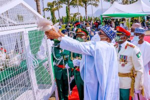 Reactions: Why pigeons refuse to fly on Armed Forces Remembrance Day
