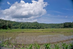 THE PHILIPPINES – A BACKPACKER'S GUIDE - Rice fields