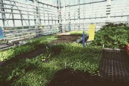 Urban Farmers Den Haag005