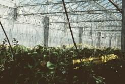 Urban Farmers Den Haag014
