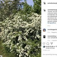 Centrale linkpagina Instagram en andere sociale media