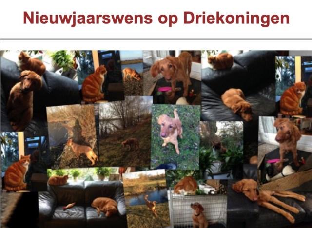 Het nieuwjaarsgedicht van 2016-2017 was gewijd aan onze nieuwe huisgenoot, Frieda de Hovawart.