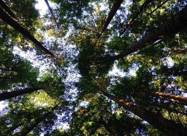 More-Trees_865x500