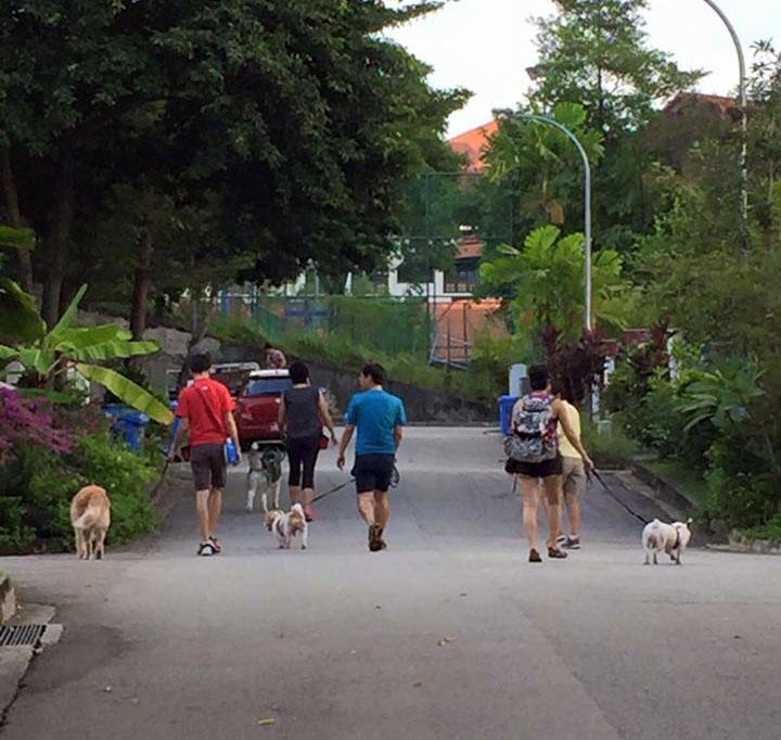 Alumni of Cheerful Dogs