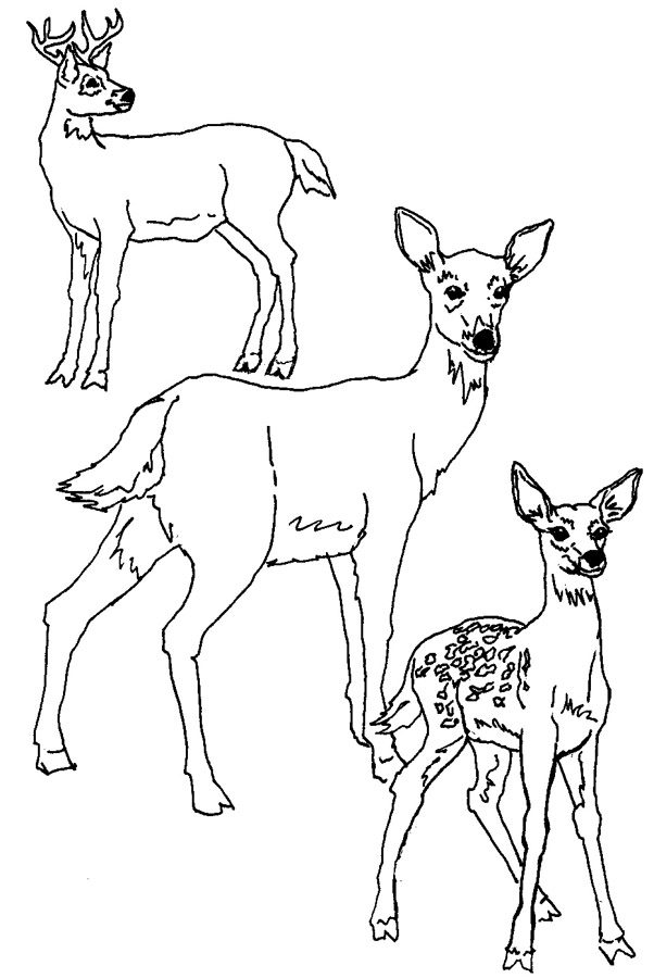 deer pictures pics images and photos for your tattoo