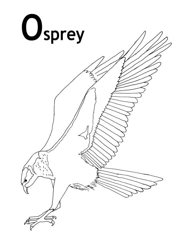 OSPREY PICTURES, PICS, IMAGES AND PHOTOS FOR YOUR TATTOO