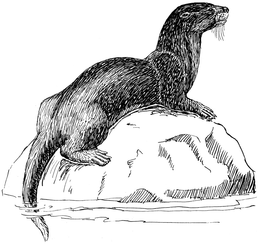 OTTERS PICTURES, PICS, IMAGES AND PHOTOS FOR YOUR TATTOO