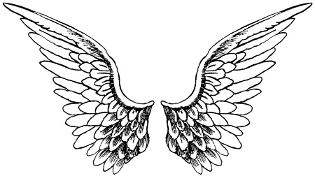 WING PICTURES, PICS, IMAGES AND PHOTOS FOR INSPIRATION