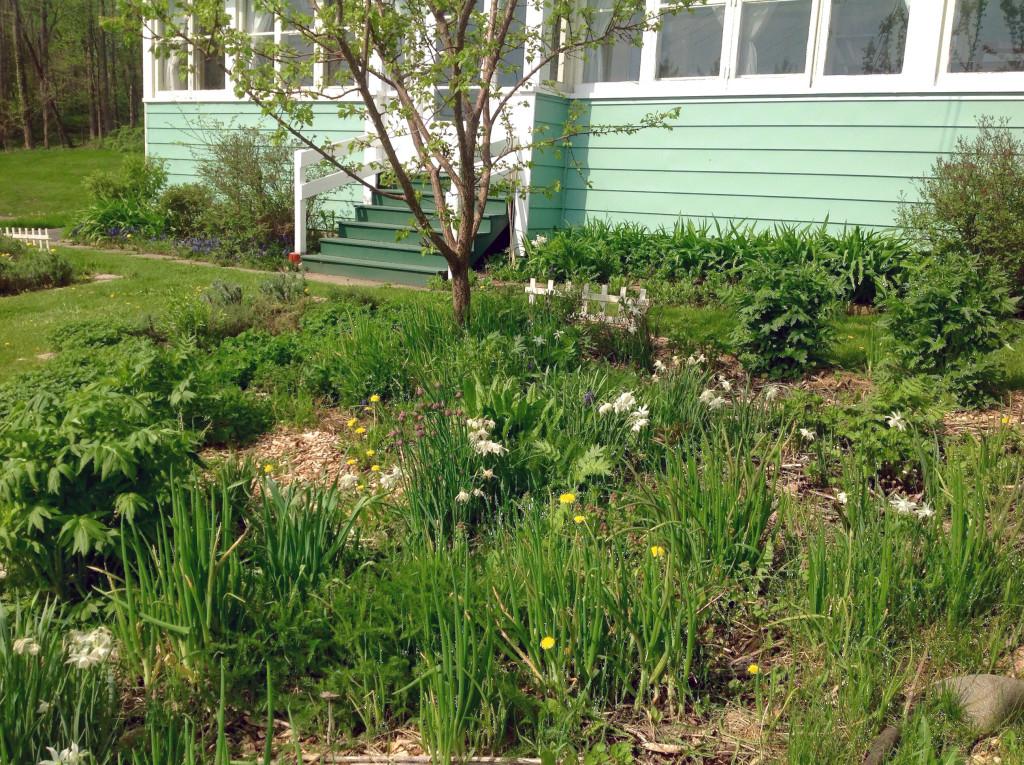 Front Yard Edible Garden Ideas