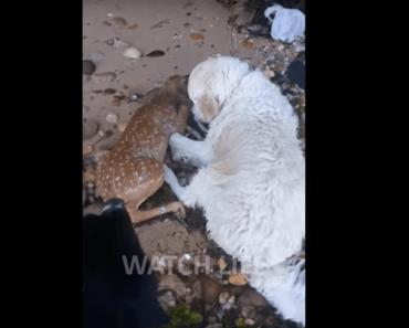 hondt storm redt hertenkalfje uit het water