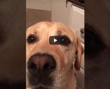 hond whitney houston