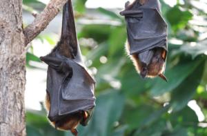 settled bats