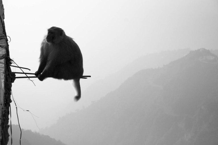 Opička na drátě