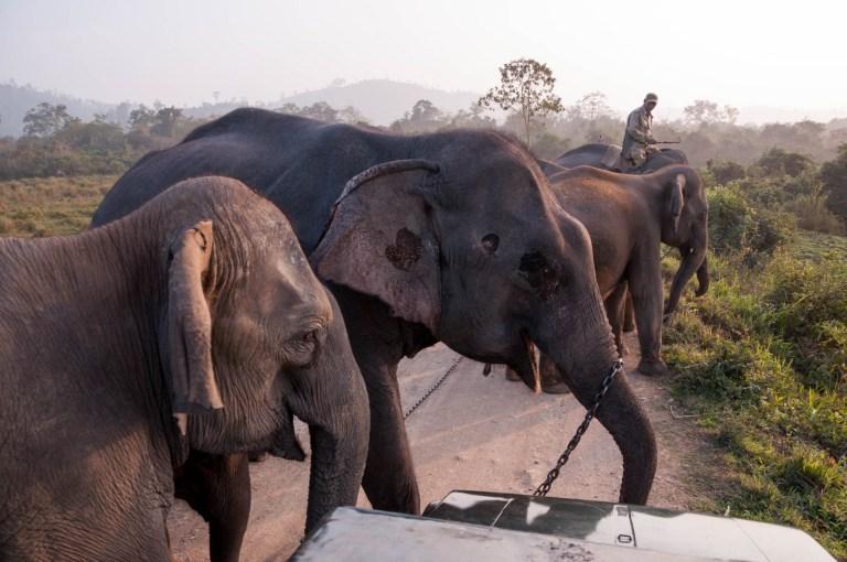 Útočící sloni