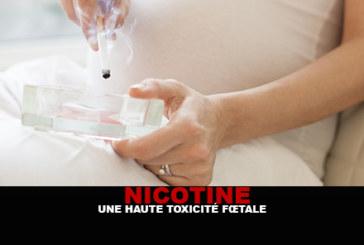 ניקוטין: רעילות עוברית גבוהה