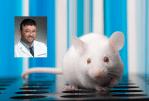 STUDY: הצטברות של שומן בכבד הנגרמת על ידי סיגריה אלקטרונית?