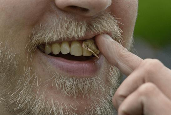 SVIZZERA: preoccupati dello snus, questo famoso tabacco da succhiare che seduce!