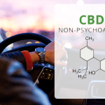 SCIENZA: vaporizzare il CBD non influisce sulla guida più di un placebo
