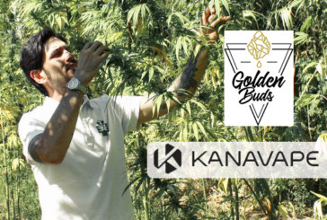 ÉCONOMIE : Après Kanavape, le pionnier du CBD lance le produit haut de gamme Goldenbuds